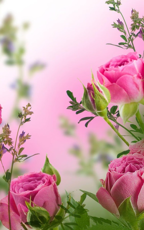 Pink Flowers Live Wallpaper - Android