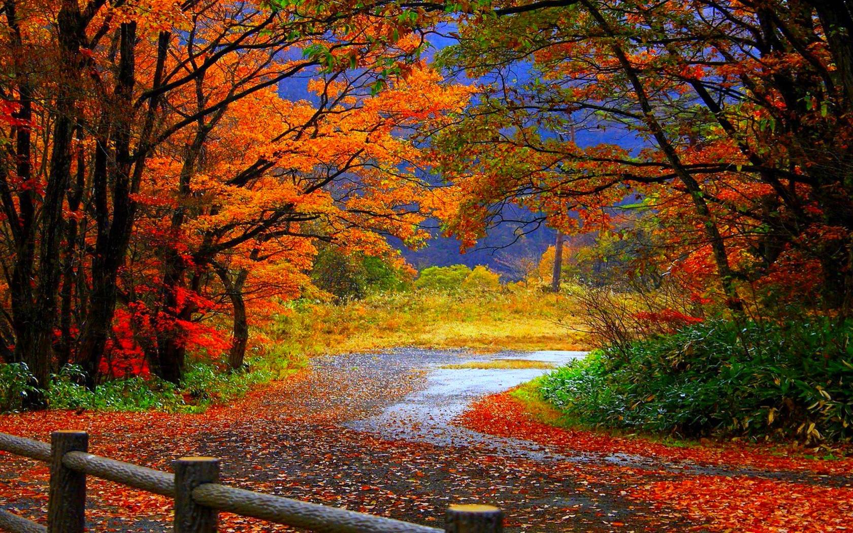 Live Wallpapers To Enjoy Falling Leaves